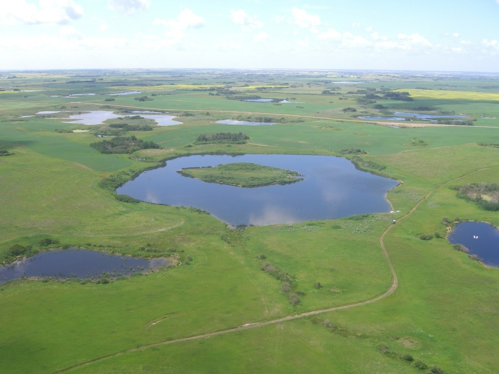 Aerial view of the wetlands and prairie landscape in the St. Denis National Wildlife Area, SK (photo: Mark Bidwell. From http://www.ccrnetwork.ca/science-programme/research-sites/prairie/st.-denis.php)
